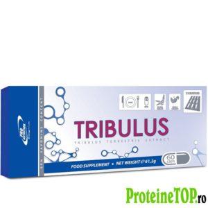 Tribulus-Saponim